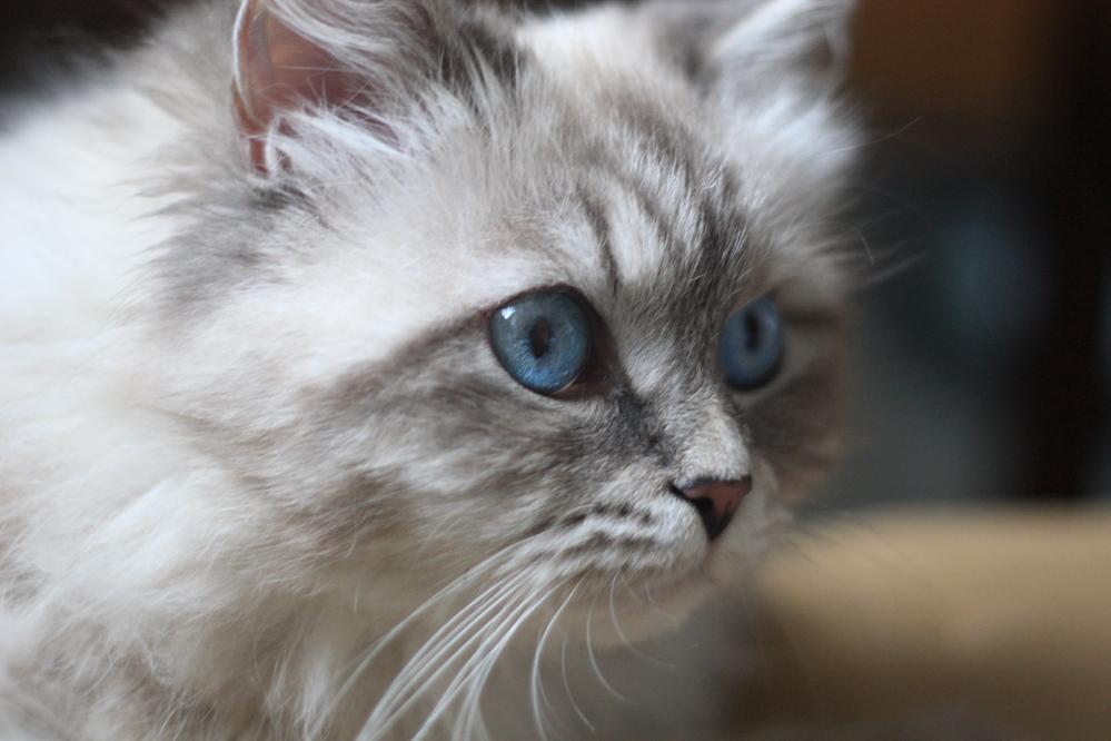 Kot Przynosi Mysz Jako Prezent Felis De Nievepl